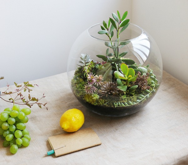 terrarium-planten